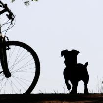 Fahrrad Unfall mit Hund