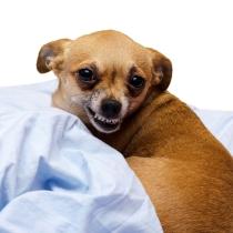 Körperliche Schäden - Hundehaftpflicht
